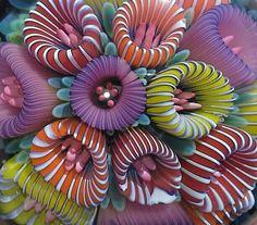 Stephan Hagstrom glass - Google Search