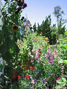 Cottage garden...  Summer Inspiration... ideas for front corner butterfly garden