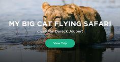 My Big Cat Flying Safari - Dereck Joubert's dream trip Lion Pride, Cheetahs, Wild Dogs, Leopards, Best Location, Brown Bear, Big Cats, National Geographic, Filmmaking