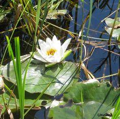 Mamman maailma: Joki Plants, Plant, Planets