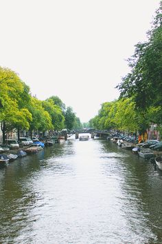 Green trees along a canal in Amsterdam.