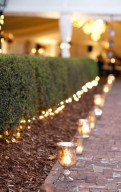 lighting path candle hurricane, boxwood hedge with twinkle lights below Christmas Decorations, Wedding Decorations, Twinkle Lights, String Lights, Outdoor Lighting, Pathway Lighting, House Lighting, Event Lighting, Outdoor Entertaining