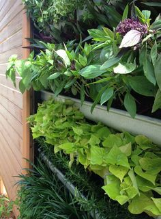 DIY vertical garden - with a garbaged shelf and some old gutter we could make this nearly free