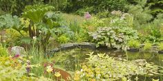 10 things you need to know before you create a wildlife pond