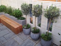 Contemporary urban small garden South London - Bench Mirrors Olive trees