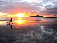 Early morning walk Takapuna beach