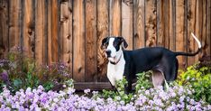 You may look at gardening as a great way to spend your Mother's Day outdoors with your pets! However, gardening brings with it a new set of potential dangers for your curious furry friends. Check out the Animal Poison Control Center's tips to keep your pets safe in the garden!