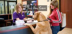 5 Ways To Find a Good Dog Day Care #pets #PetCare #dog #dogcare #dogs #puppy
