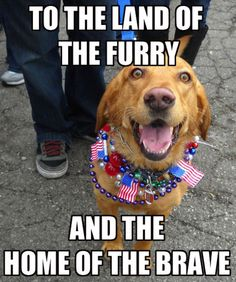 He may be man's best friend, but he is loyal to his country, too. 4th Of July Meme, Independence Day Quotes, Happy Independence, 4th Of July Images, July Quotes, Very Funny Memes, Alice And Wonderland Quotes, Happy Fourth Of July, Animal Memes