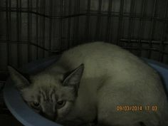 VERBENA has been reclaimed by her owner! Verbena, Shelters, Cats, Animals, Gatos, Animales, Animaux, Animal Shelters, Shelter