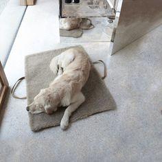 Travel Bed - Large Hazelnut Cloud 7, Matelas / Panier pour chien design
