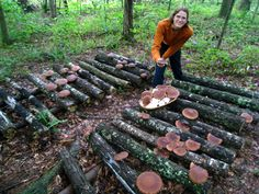 Wonderful Mushroom logs at Sourwood Farm: it's one of my goals for the homestead