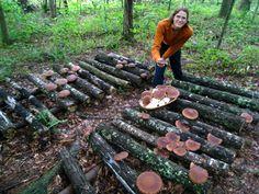 Wonderful Mushroom logs at Sourwood Farm: it& one of my goals for the homestead