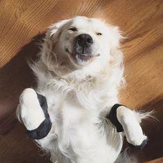 Este cão que está muito feliz por ser um cachorro. | 27 cães calçando meias que vão melhorar seu dia