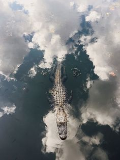 ☀. ☀ Wicked cool Alligator/Crocodile photo ... clouds reflected in the waters surface !!! Oh my, by Michael Wriston A ₩₩₩♡