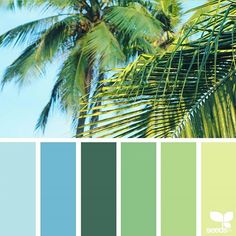 today's inspiration image for { tropical hues } is by @arasacud ... thank you, Sara, for another wonderful #SeedsColor image share!