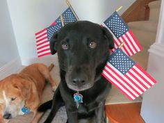 Firework Safety & Your Pets ~ More pets are reported missing on July 4th than any other day of the year! With the official holiday on Monday, there are sure to be fireworks all weekend long. Our three dogs know because it started near us on June 29th...