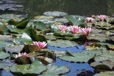 Giverny, France  Monet's waterlilies