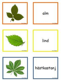 Tema träd – trädmemory | Emma Fall Preschool, Preschool Science, Teaching Biology, Teaching Tools, Learn Swedish, Swedish Language, Nature Study, Garden Trees, Activities To Do