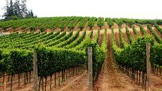 Sonoma Boutique Wineries Tour | Sonoma Wine Tours