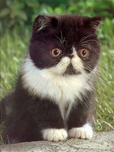 Mustache as kitten