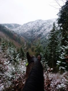 As Seen Through Horses Ears - Winter