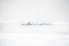 Lumen by Akos Major, via Behance
