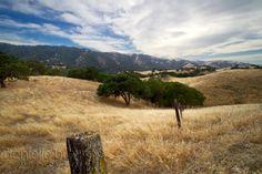 Fine Art Photograph, Landscape California Golden Hills Oak Tree Clouds, Matted 8x12. $50.00 USD, via Etsy.    http://www.etsy.com/listing/78135661/fine-art-photograph-landscape-california?ref=v1_other_2#