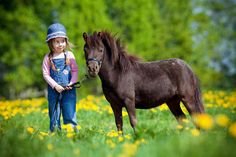Small Horse and Child in a Meadow