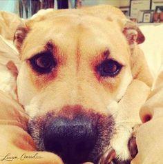 favorite pup #chloe #cute #dogs