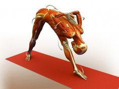 flexión raquis y estiramiento lumbar e isuiotibiales