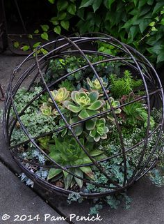 Succulent-filled wire sphere. Love just around the bend at Bella Madrona: Portland Garden Bloggers Fling | Digging