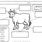 Farm coloring and activity book. Printable preschool