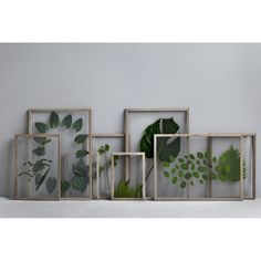Moebe frames with leafs