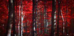 Ildiko Neer ~ La foresta incantata
