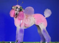 7 - Fairydog