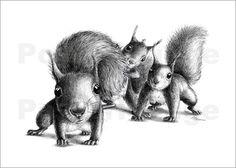 drei eichhörnchen Bilder: Poster von Stefan Kahlhammer bei Posterlounge.de