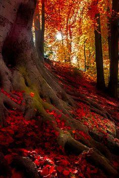 Autumn landscape More - Nature Photo - Best Nature Photos - Beautiful Natural Photos Beautiful World, Beautiful Places, Beautiful Pictures, Beautiful Scenery, Wonderful Places, Autumn Lights, All Nature, Autumn Nature, Nature Gif