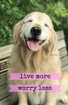 Golden Retriever Puppies Smiling Golden Retriever Dog Live More Worry Less Poster by Golden Retriever Quotes, Golden Retriever Mix, Retriever Puppy, Golden Retrievers, Labrador Retrievers, Training Tips, Dog Training, I Love Dogs, Cute Dogs