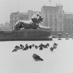 Trafalgar Square in the Snow, Christmas 1957 / © Henry Grant Collection / Museum of London