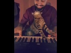 Are Cats Nocturnal Key: 7805437599 Animals And Pets, Baby Animals, Cute Animals, Cats That Dont Shed, Men With Cats, Super Video, Cats And Cucumbers, Animal Crackers, Buy A Cat