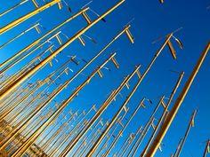 #Bondi #sculpture #bamboo