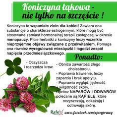 Blog o zdrowym i naturalnym odżywianiu, ziołach, przyprawach i roślinach.: KONICZYNA ŁĄKOWA - nie tylko na szczęście! Nutrition Tips, Superfoods, Smoothies, Herbalism, Healthy Living, Spices, Remedies, Food And Drink, Health Fitness