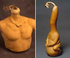 The art of Gourd Shaping; growing a gourd inside a hollow form. These gourds were not carved or altered after being harvested.