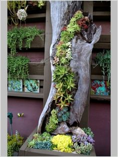 5. Log Planter  Use the hollow log to plant some succulents inside and make a really unique and creative vertical garden. So beautiful!