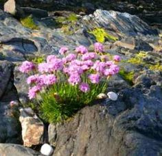 These flowers growing out of a rock appear as a testimony to faith in God!