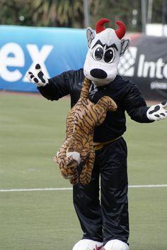 Rocco haciendo de las suyas con un peluche de tigre