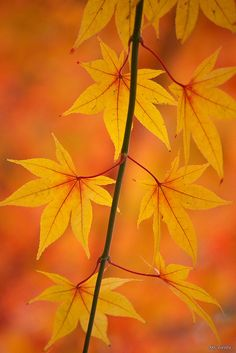 yellow Ⅱ by Sky-Genta on Flickr* #nature