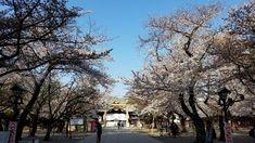 Yasukuni Shrine (Čijoda, Japonsko) - Recenze - Tripadvisor Yasukuni Shrine, Jakarta, Temples, Mumbai, Trip Advisor, Outdoor, Outdoors, Bombay Cat, Outdoor Games