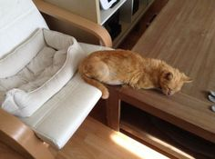 So close. Just inches from its comfortable bed, this cat snoozes on a hard wooden bench. Snap Cat, Cat Gifts, Funny Gifts, Animals And Pets, Cat Lovers, Stuff To Buy, Cat Stuff, Beds, Animais